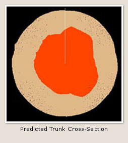 Date image of predicted tree trunk cross-section